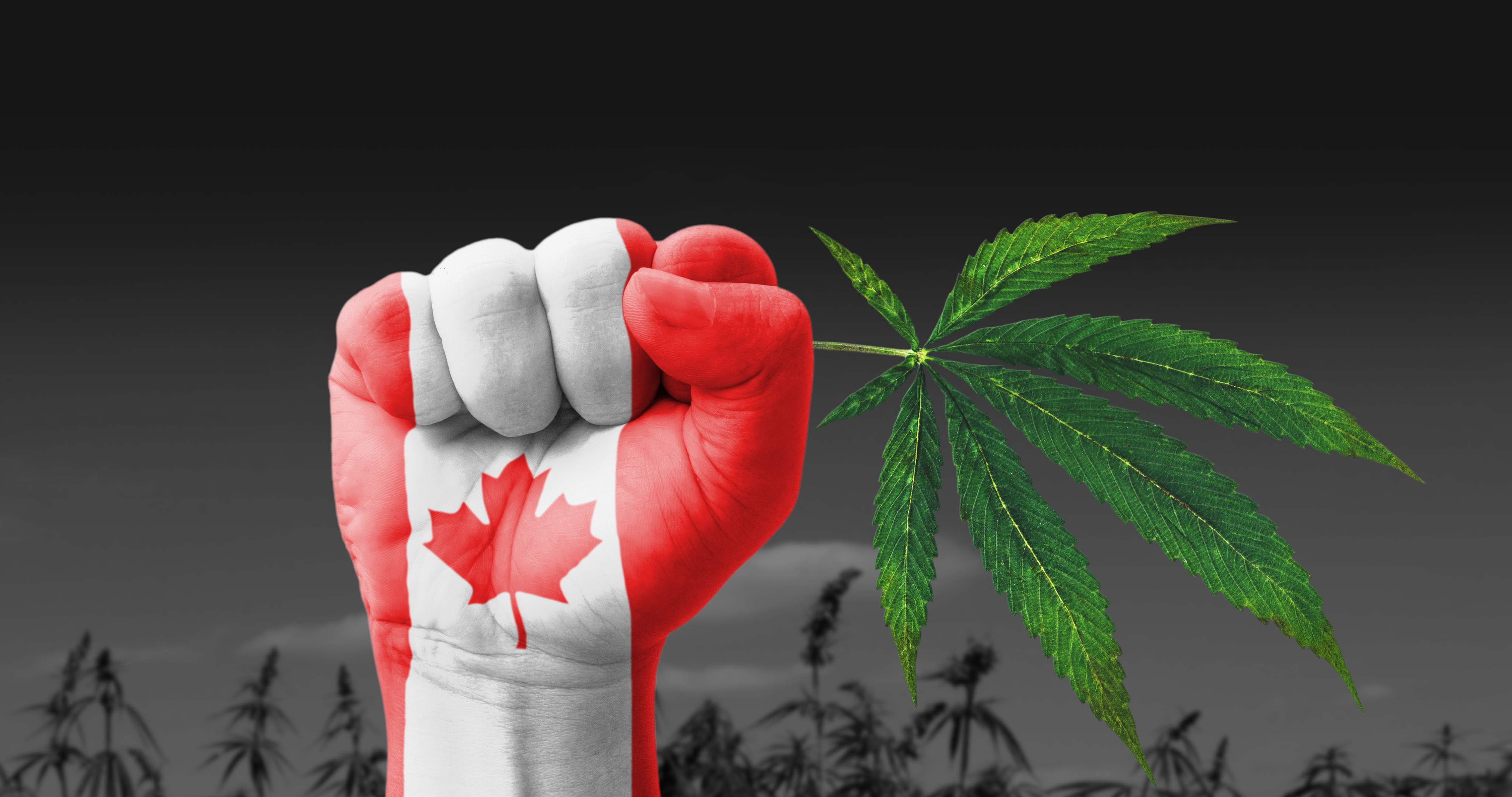 Canada Releases Updated Medical Cannabis Regulations